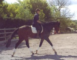 Kent Livery Yard Retraining ex racehorse